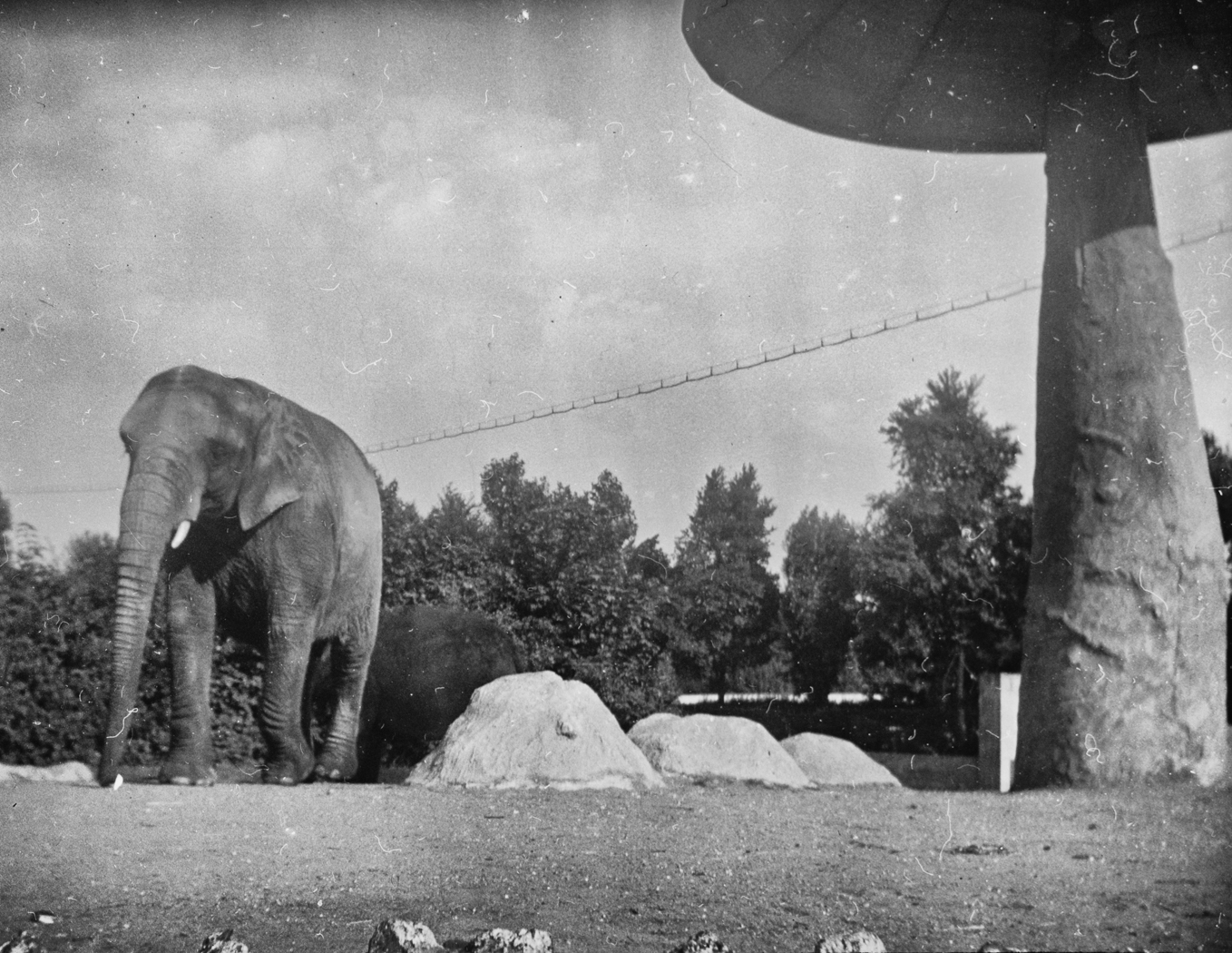 133_114 Elephant- Zoological Gardens