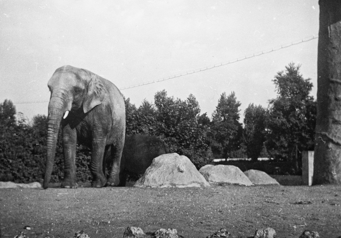 178_Indian Elephant- London Zoo