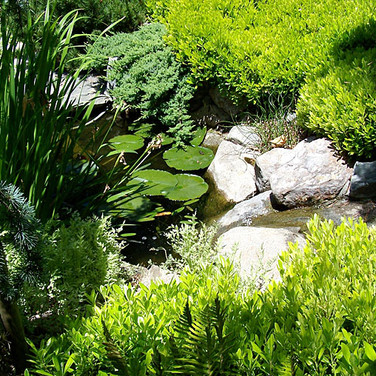 A small pond in a back yard sanctuary.