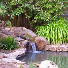 A small wildlife pond.