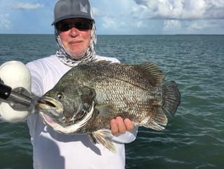 Fantastic Fall Snook & Tarpon Fishing