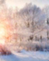 Winter landscape - frosty trees in snowy