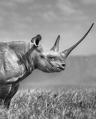 The-Girl-On-The-Hill-Rhino-WWW-1440x911_