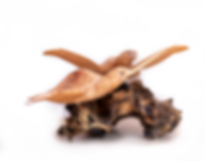 wooden_turtle_Wood_small.png
