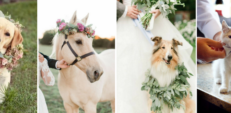 5 Ways To Include Fur-Baby For The Paw-fect Wedding!
