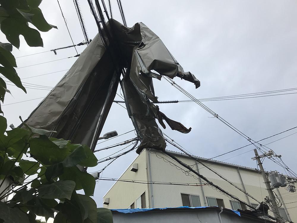 台風 保険