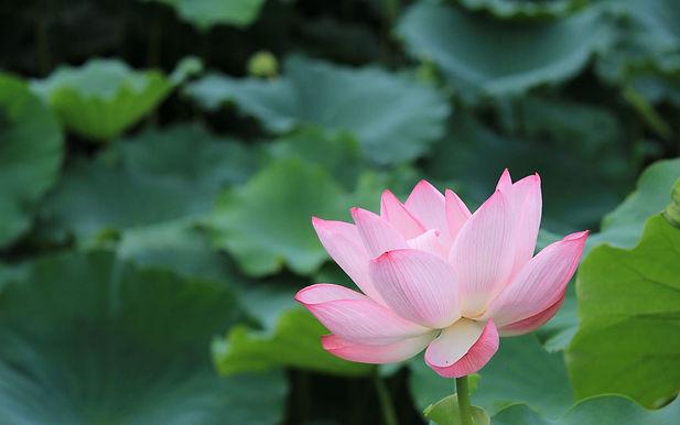 株式会社Lotus