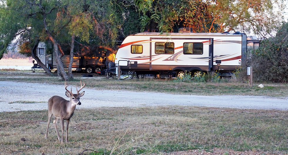 Camping%20in%20Texas%20with%20deer%20by%20the%20lake_edited.jpg