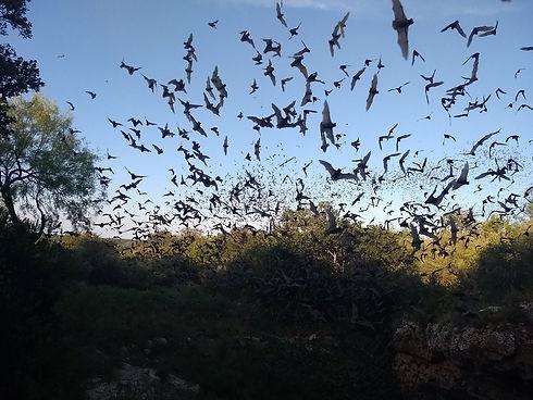 james-eckert-river-bat.jpg