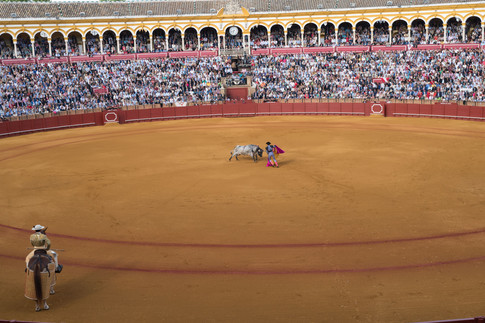 BULLFIGHT WITH PICADOR
