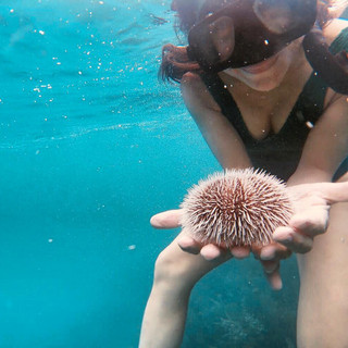 Tourist with Sea Orchin Placencia