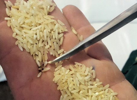 PRESS RELEASE | The BPP statement on the rice industry