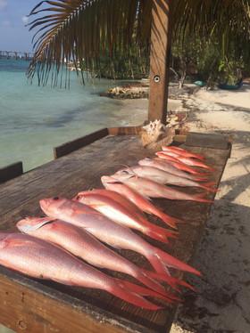 Deep Sea Fishing Charters