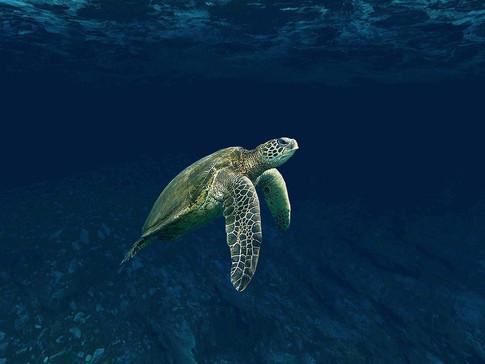 turtle-4032569_1920.jpg