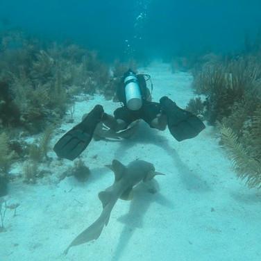 Scuba Diving with Nurse Shark Placencia