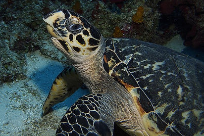 Snorkeling at Silk Cayes