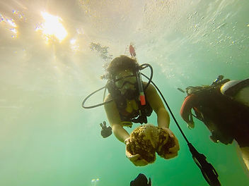 Diver showing a coral in Placencia Belize