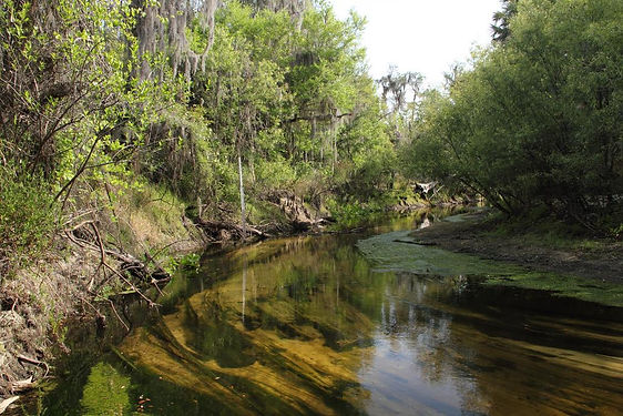 GUIDED TOUR OF PAYNES CREEK NATIONAL PARK