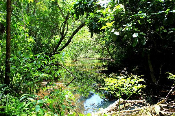 Stann Creek River in the Jaguar Reserve