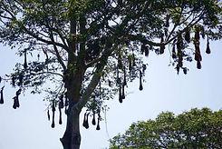 bird nests in Monkey River