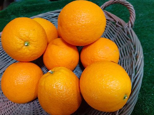 Orange de table, les 500 g