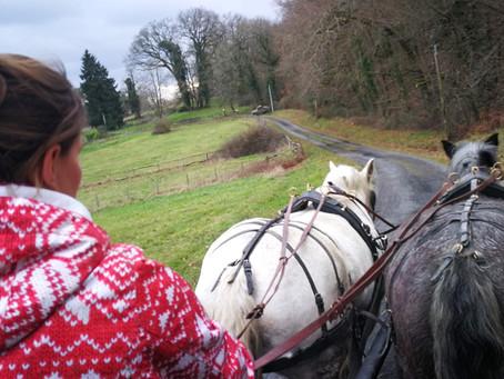 Les vacances sont finies !!! Les chevaux ont réenfilés leurs cuirs et repris le chemin du travail...