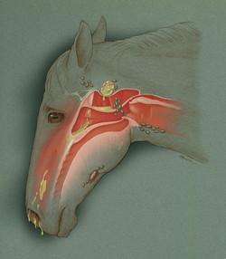 Horse with Strangles