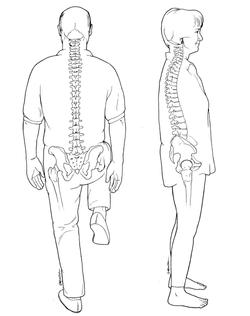 Spine Drawings