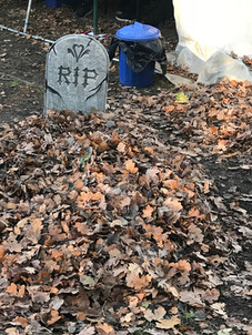 Forest Grave