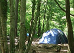 Ferny Crofts Woodland Campsite