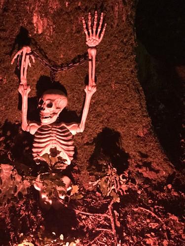 Skeleton Woods