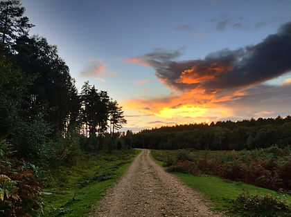 Sunset Ferny Crofts