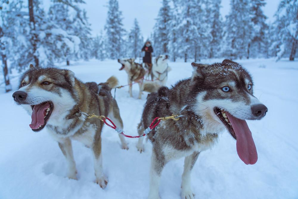 Lapland, FTLO