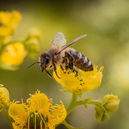 Bee Sting First Aid Tips