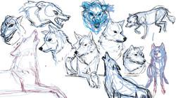 Wolf Warmups