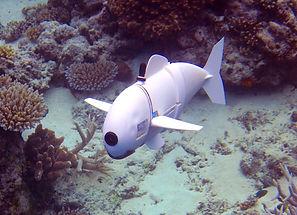 robitic fish.jpeg