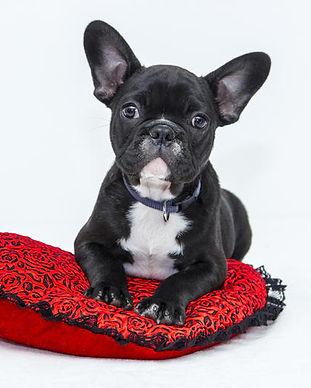 Super Puppy.jpg