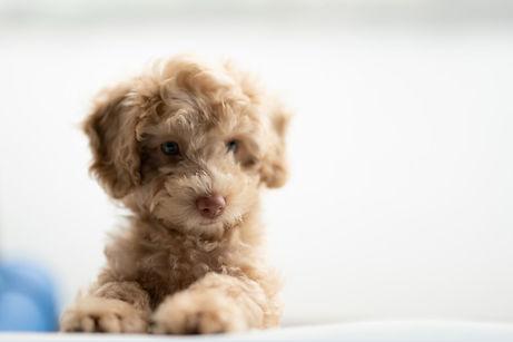 121 Puppy Consult.jpg