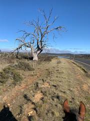 Highland Lakes Rd Tods Corner, Tasmania - 1 April, 2020