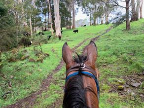 The Trail Forward