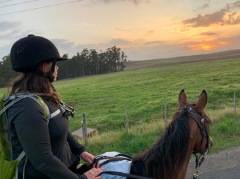 Native Plains Rd Sassafras, Tasmania - 28 March, 2020