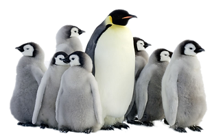 waddle-insurance-services.png
