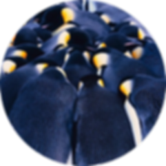 waddle-insurance-penguin-huddle-backgrou