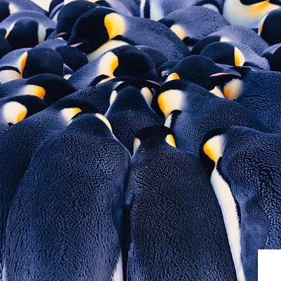 waddle-insurance-penguin-huddle-backgrou
