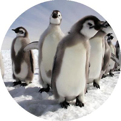 waddle-insurance-penguin-chicks-backgrou