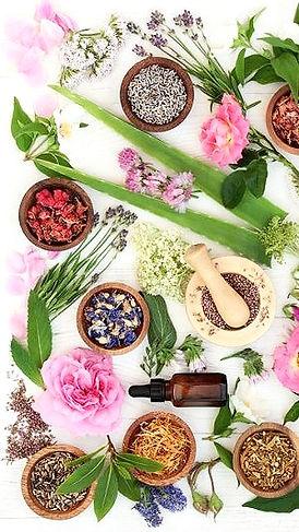 Anemone therapie consultation fleurs de
