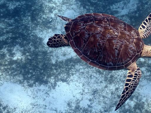 SEA SHEPHERD / Opération Nyamba #4 - Défendre les tortues marines de Mayotte !