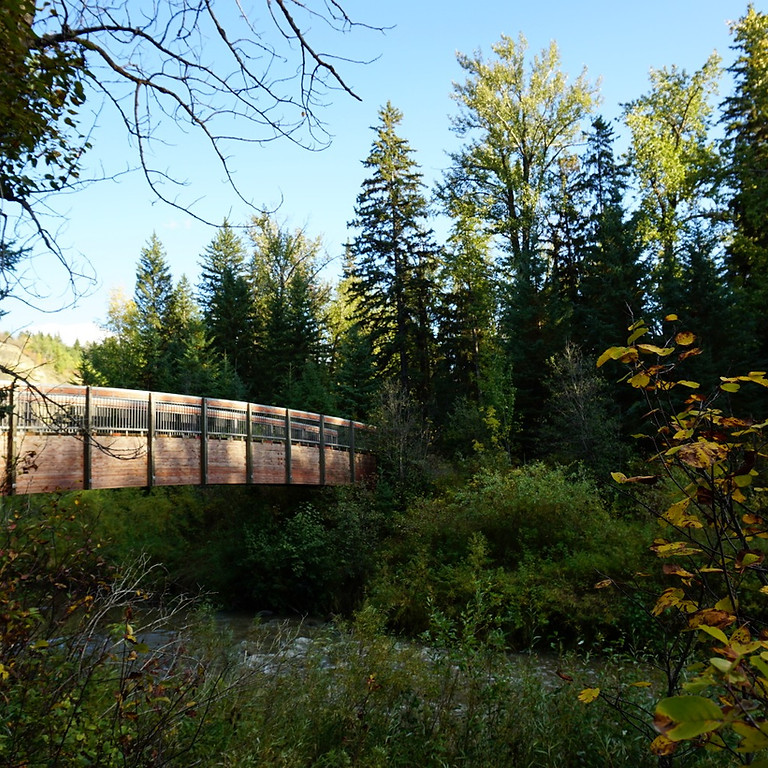 Forest Therapy Walk - August 22nd