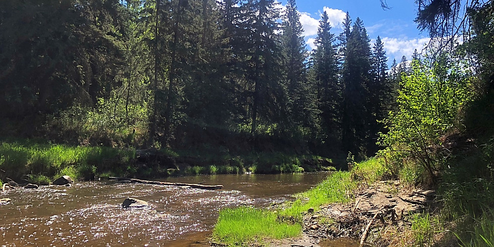 Forest Therapy Walk - May 16th