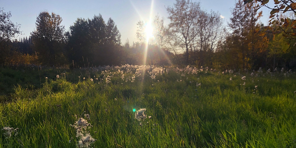 Forest Therapy Walk - June 21st Summer Solstice